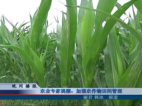 农业专家提醒:加强农作物田间管理