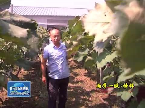 陈杰:发挥党支部战斗堡垒作用 带领村民脱贫致富