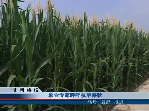 农业专家呼吁抗旱保秋