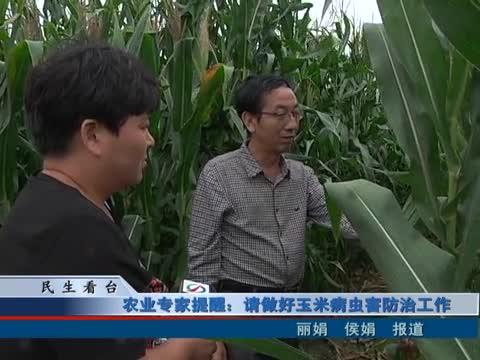 农业专家提醒:请做好玉米病虫害防治工作
