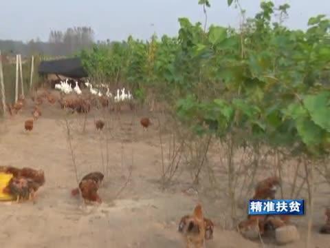 平舆:充分发挥新型农业经营主体作用 引领群众脱贫
