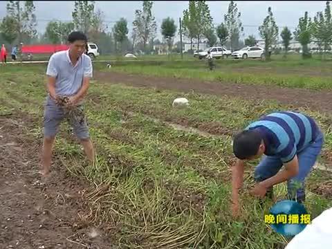 正阳:千名党员干部帮助困难群众抢收花生