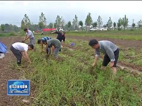 正阳县万名党员干部帮助困难群众抢收花生