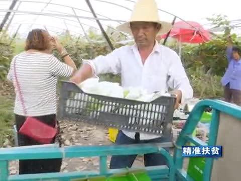驿城区小陈庄村:推进产业扶贫 增强造血功能