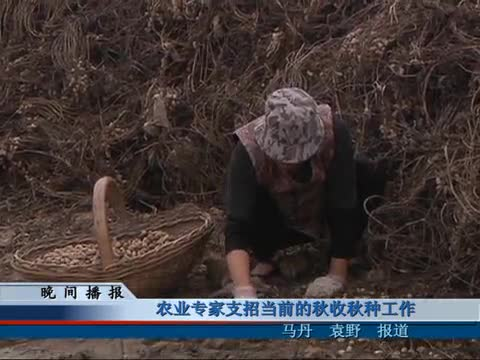 农业专家支招当前的秋收秋种工作