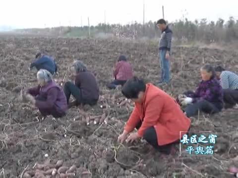 平舆:积极打造生态农业产业体系