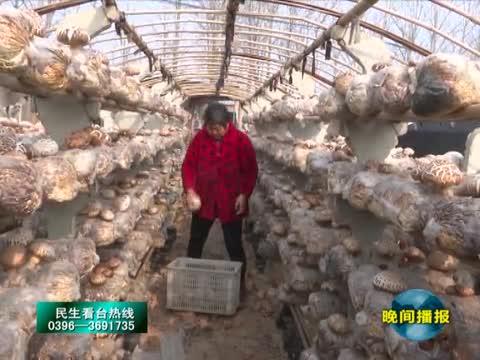 孙红旭:种植花菇走上致富路