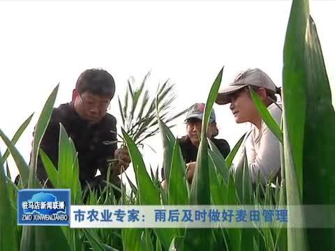 市农业专家:雨后及时做好麦田管理