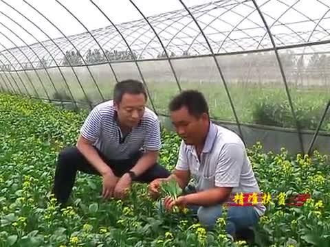 """驿城区:发挥合作社优势 鼓起农民""""钱袋子"""""""