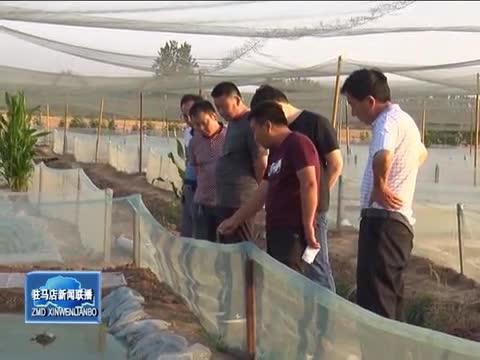张海超:返乡创业养青蛙 带领群众奔致富