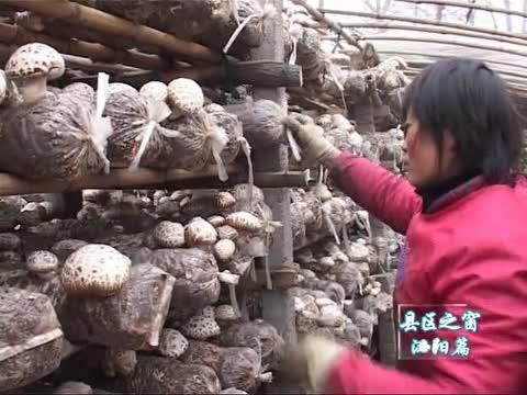 河南省真菌研究院助推泌阳县食用菌一二三产业融合发展