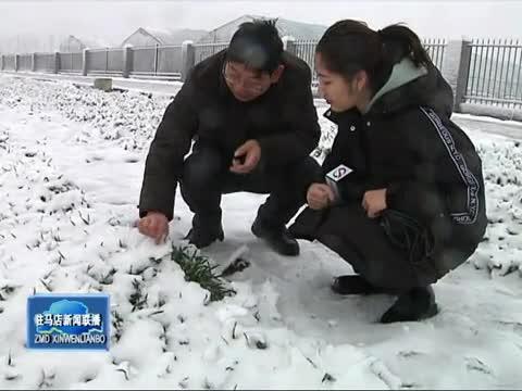 市农业专家 雨雪后适时进行麦田管理