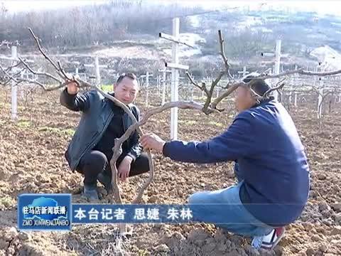 金峰种植农民专业合作社带动村民增收致富