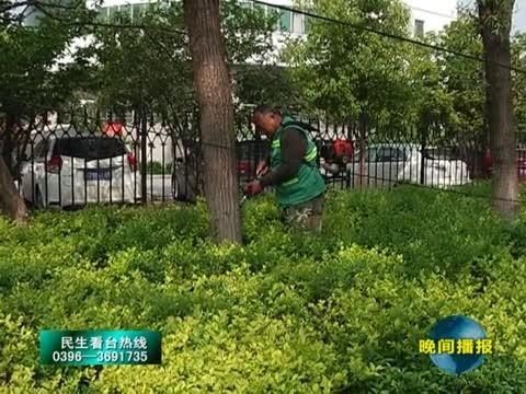 市园林部门防治杨絮柳絮飘飞