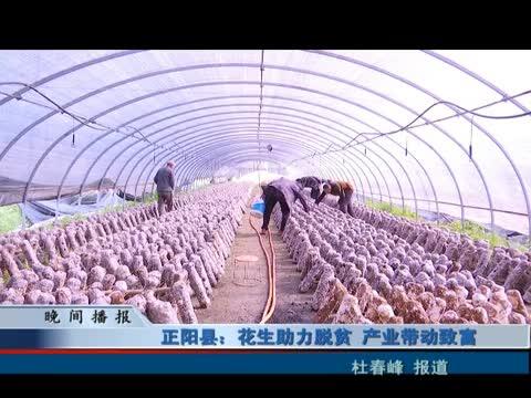 正阳县花生助力脱贫 产业带动致富