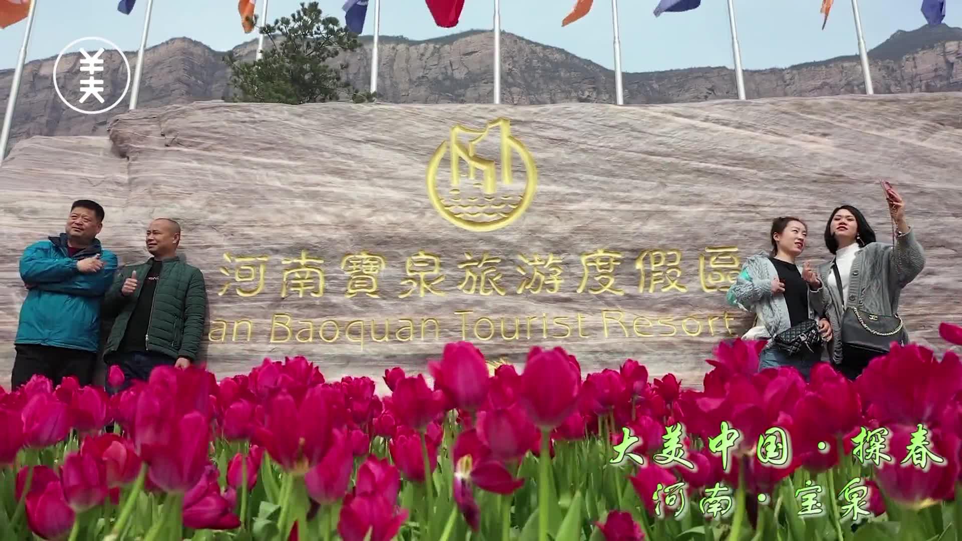 《大美中国·探春河南宝泉.》