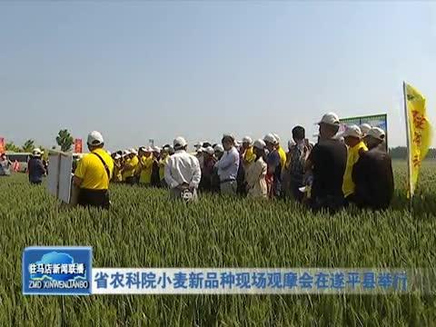 省农科院小麦新品种现在观摩会