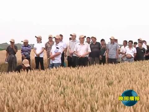观摩小麦新品种 推广农业新技术