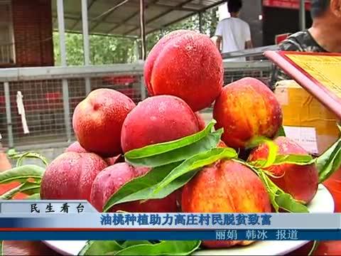 油桃种植助力高庄村民脱贫致富