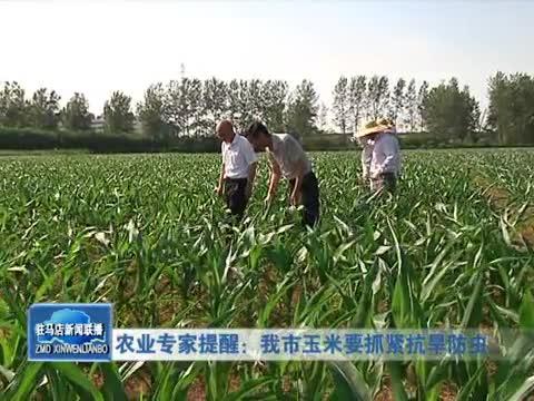 农业专家提醒 我市玉米要抓紧抗旱防虫