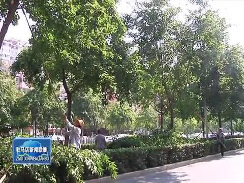 市园林部门修剪行道树 消除安全隐患
