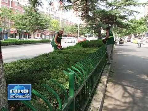 炎炎烈日 园林工人奋战护绿一线