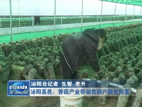 泌阳高邑香菇产业带动贫困户脱贫致富