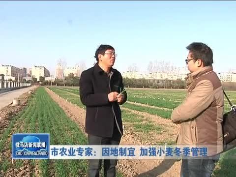 市農業專家因地制宜 加強小麥冬季管理