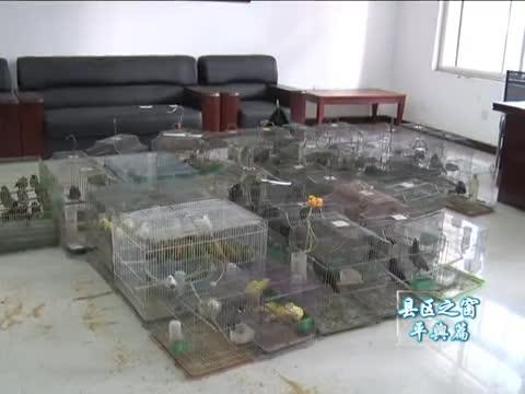 平輿破獲一起非法收購運輸出售野生動物案