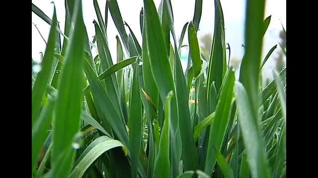 农业专家提醒要加强春季麦田管理