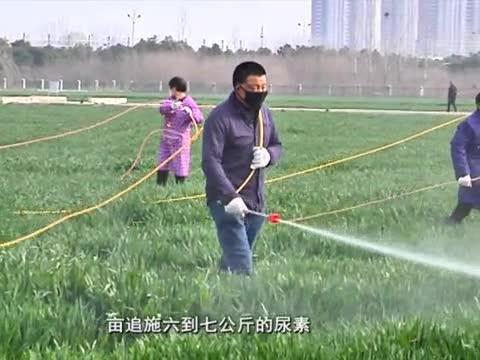 农业专家提醒小麦拔节施肥时