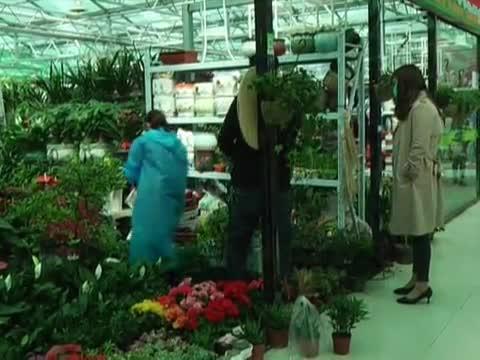 天中花卉市场开门迎客