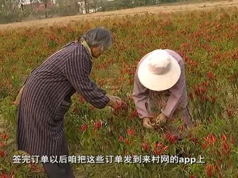 来村网:抓住市场托起农民致富的希望
