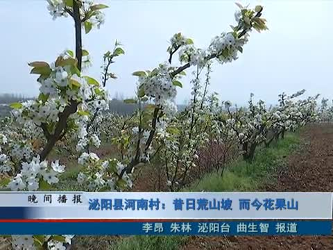 泌陽縣河南村:昔日荒山坡 而今花果山