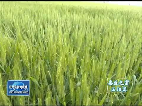 正阳:抓住有利时机 防治小麦病虫害