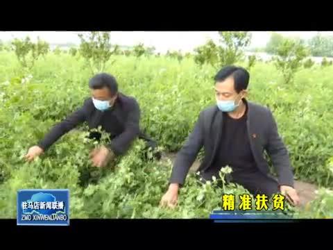 上蔡朱庄社区:发展林下经济 助力贫困户增收致富