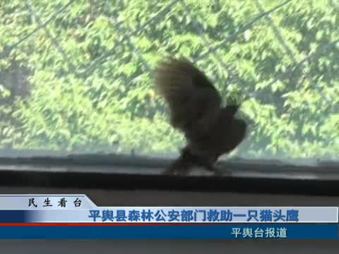 平輿縣森林公安部門救助一只貓頭鷹