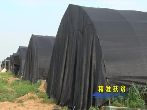 遂平县槐树乡:产业扶贫发力 助农脱贫致富