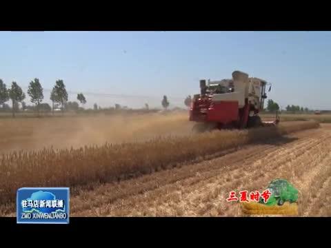 上蔡遂平:农民趁天抢时收割小麦