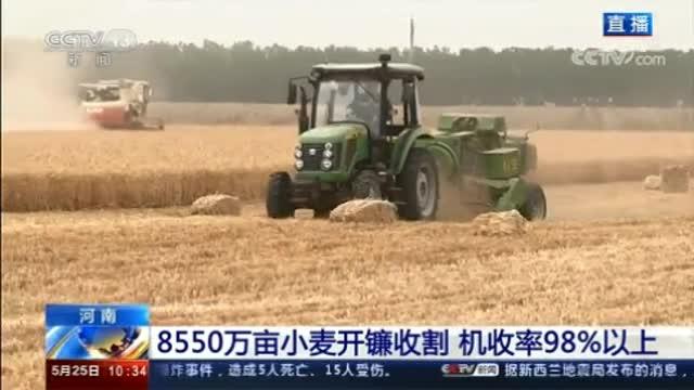 【央视新闻频道聚焦驻马店】小麦开镰收割 机收率98%以上