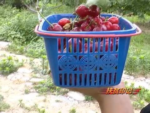 遂平朱屯:依托产业助力脱贫