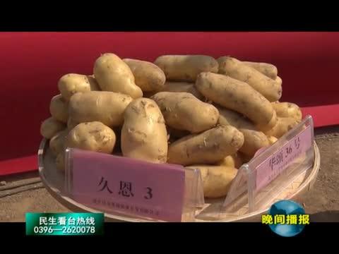 沟南刘村的马铃薯丰收节