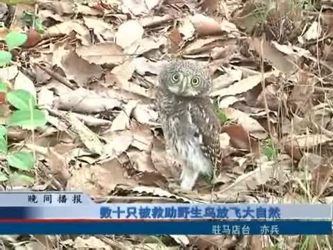 數十只被救助野生鳥放飛大自然