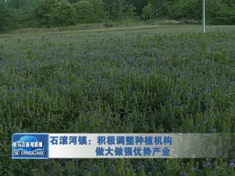 确山县石滚河镇:积极调整种植机构 做大做强优势产业