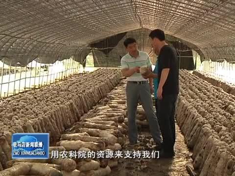 百企帮百村 润通帮扶石古庄村种香菇