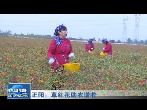 正陽:草紅花助農增收