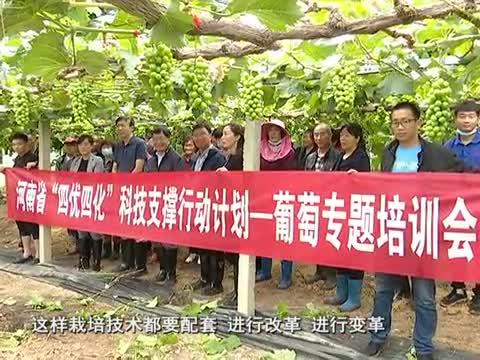 国家葡萄产业技术体系豫东试验站培训会在遂平举行