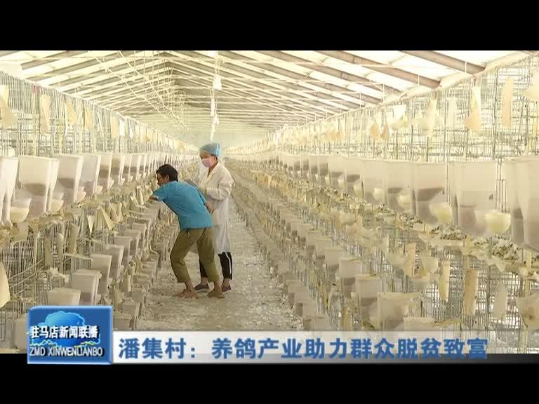 潘集村:養鴿產業助力群眾脫貧致富