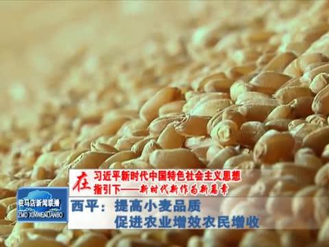 西平:提高小麦品质 促进农业增效 农民增收