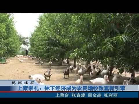 上蔡崇礼:林下经济成为农民增收致富新引擎